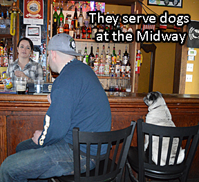 Serving dogs at the Midway